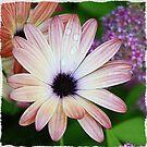 My Daisy by FLgirl