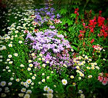 Lomoish Flowers  in Mirrored Frame by BlueMoonRose