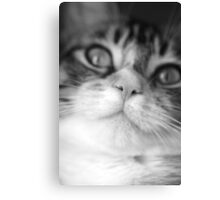 I love this nose! Canvas Print