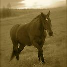 4 You !   by Brown Sugar .  has been FEATURED in EQUINE Portrait Photography . Views (51) thx! by © Andrzej Goszcz,M.D. Ph.D
