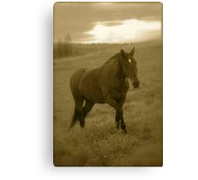 4 You !   by Brown Sugar .  has been FEATURED in EQUINE Portrait Photography . Views (51) thx! Canvas Print