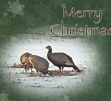 Christmas Card - Wild Turkeys by MotherNature