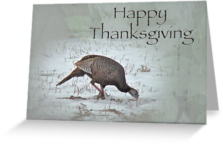 Thanksgiving Card - Wild Turkeys by MotherNature