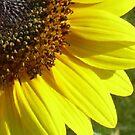 Quarter Flower by WildestArt