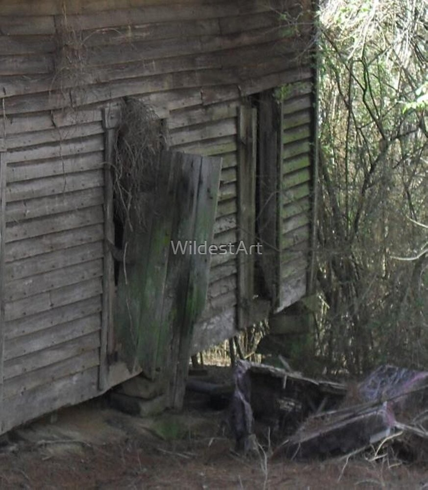 Alabama Barn, the Back Door by WildestArt
