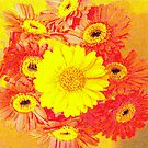 POP ART GERBERA'S. by Livvy Young