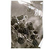 Summer Fruit, Beaming Sun, a Feather and a Spiders Web. Poster