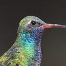 Broad Billed Hummingbird by loiteke