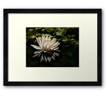 Glowing ivory waterlily Framed Print