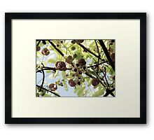The Chocolate Vine Framed Print
