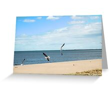 Dancing Seagulls Greeting Card