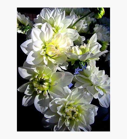 White Dahlia Photographic Print