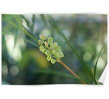 Emerging flower Poster