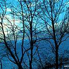 Winter Wonderland by Mechelep