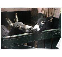Kisses - Donkeys Poster
