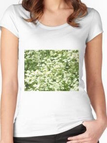 Large field overgrown with small white daisy flowers closeup Women's Fitted Scoop T-Shirt