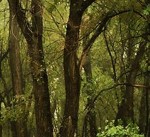 The Forest For The Trees by KatsEyePhoto