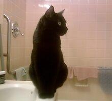 BABY PHAT ! by catnip addict manor