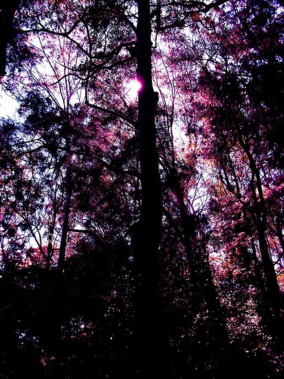 purple shine by mark thompson