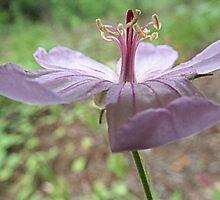 Little Wild Flower In Hailey, Idaho by trueblvr
