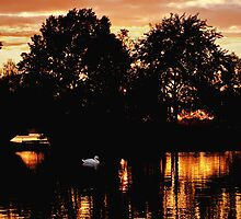 Floating through sunset's shadow by Owed To Nature