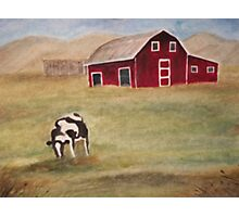 The Lonely Cow Photographic Print