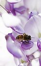 Bee On Westeria Flowers by Evita