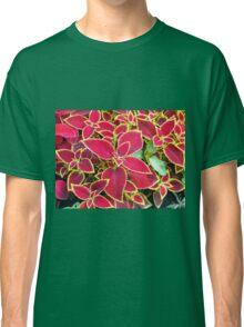 Red Coleus plant closeup Classic T-Shirt