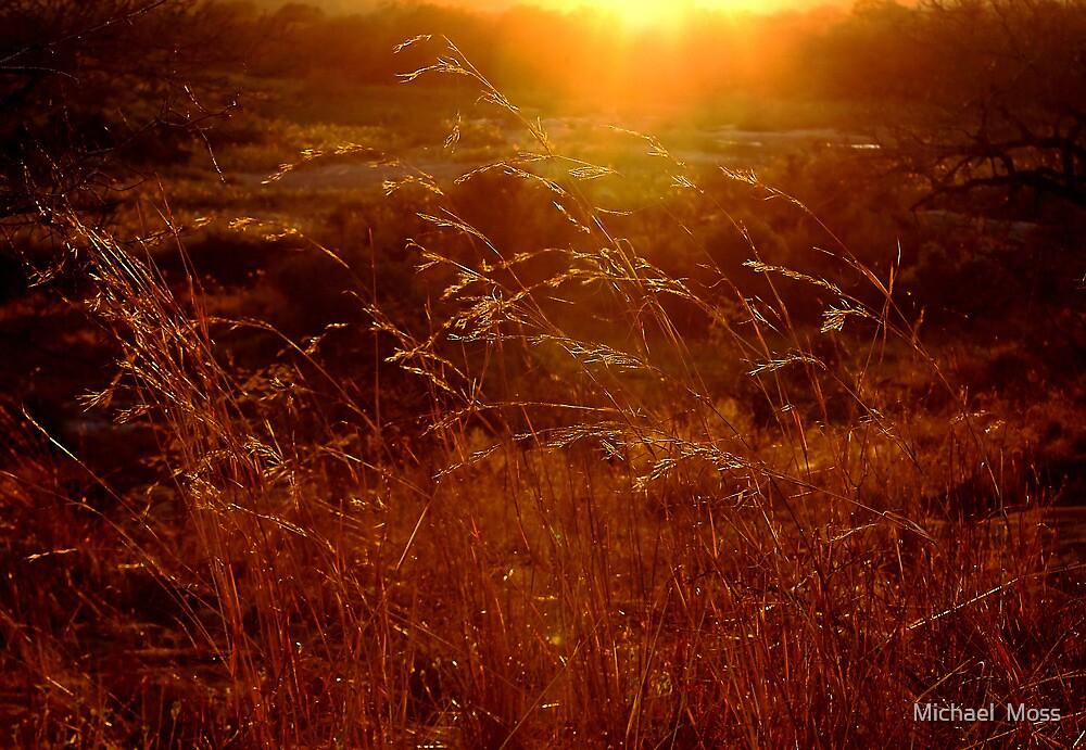 Toulon Sunset by Michael  Moss
