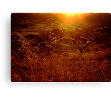 Toulon Sunset Canvas Print