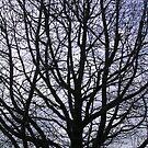 Tree Silhouette by Joan Wild