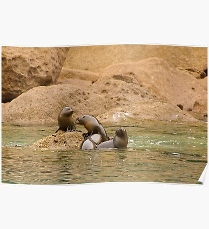 Seal Cubs at Play 2 Poster
