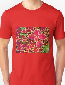 Red Coleus plants closeup on a flower bed T-Shirt