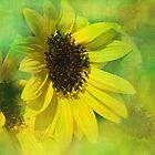 sunflowers by Teresa Pople