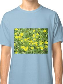 Thickets of small yellow flowers Picris Rigida at forest lawn Classic T-Shirt