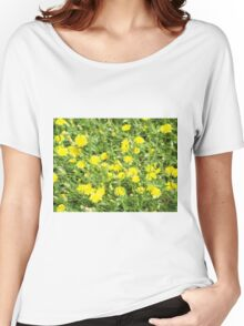 Thickets of small yellow flowers Picris Rigida at forest lawn Women's Relaxed Fit T-Shirt