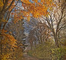Autumn in Bayern - path in the wood by Luisa Fumi