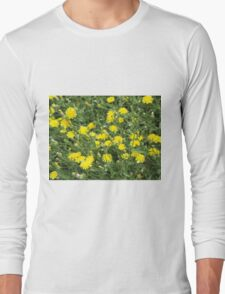 Thickets of small yellow flowers Picris Rigida T-Shirt