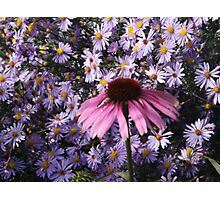 Flower on the High Line, New York City's Elevated Garden and Park Photographic Print