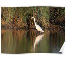 Evening Wetlands Poster