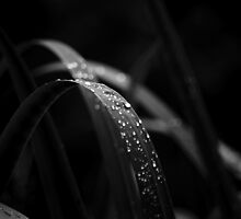 Water beads on the leaves by mudd-photo