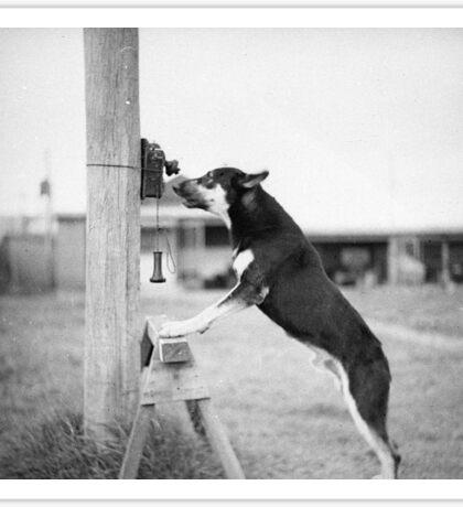 Police Dog, Tess Sticker