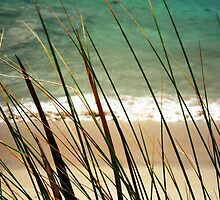 Reeds along the Beach by Helly Peacock