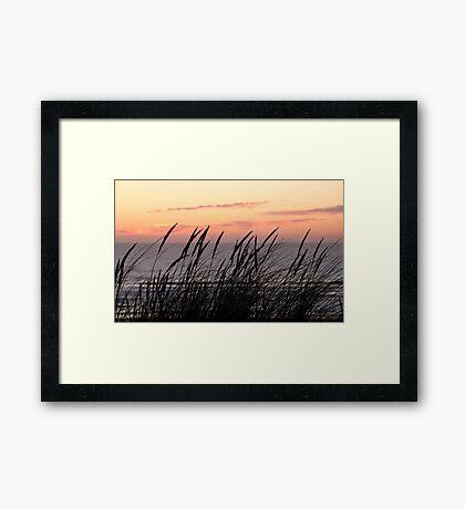 Dune Grass At Sunset Framed Print