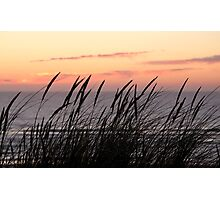 Dune Grass At Sunset Photographic Print