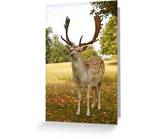 Who you looking at? Greeting Card