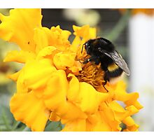 The Bee on the Station Platform Photographic Print