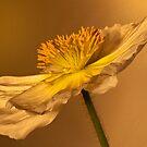 Poppy Platter by Dianne English