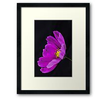 Purple Cosmos Framed Print