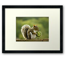 Whose been eating my sunflower seeds? Framed Print